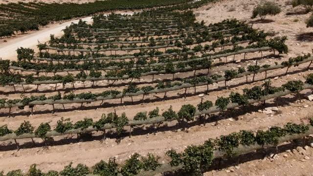 vídeos de stock, filmes e b-roll de aerial photography of avdat vineyards - israel