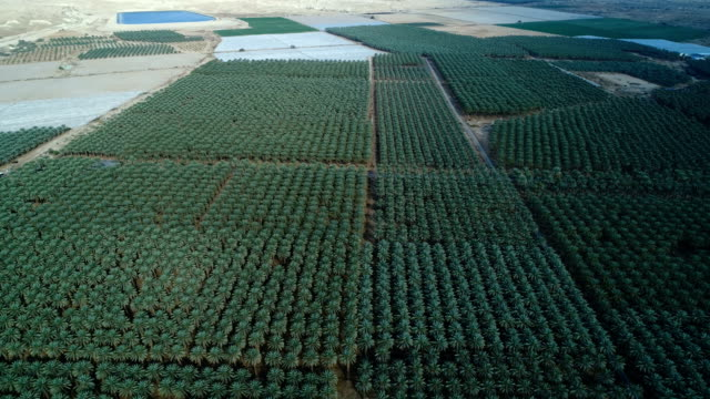 Aerial photography of the Palm plantations in the Rift Valley
