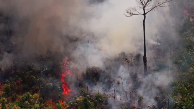 vídeos de stock e filmes b-roll de aerial pictures show a fire raging in the amazon rainforest about 65 kilometres from rondonia state capital porto velho - amazonas state brazil