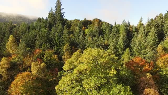 aerial: picturesque dense forest with autumnal trees and towering pines in the sunshine - perth, scotland - perthshire stock videos & royalty-free footage