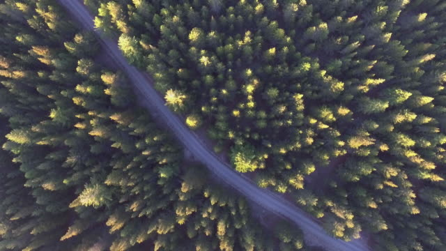 aerial pine forest - air to air shot stock videos and b-roll footage