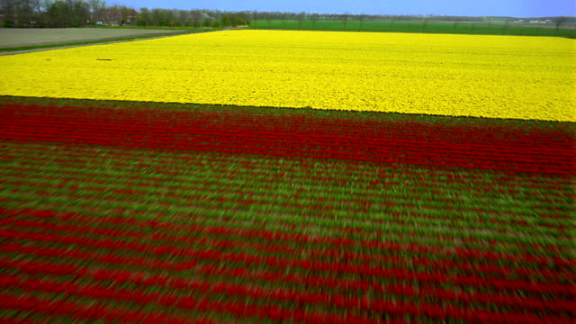 aerial point of view over farm fields / den helder, holland - holland stock videos and b-roll footage