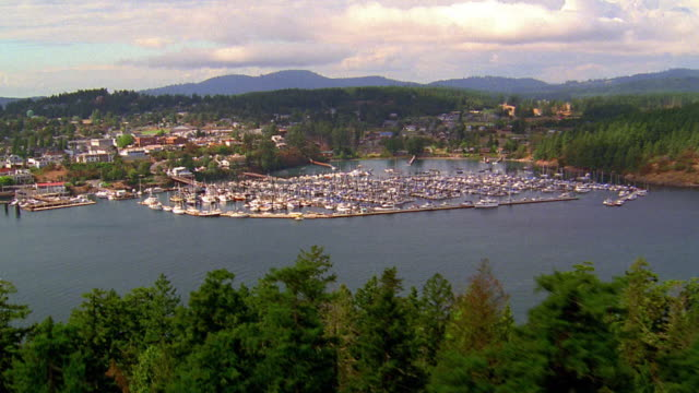 Aerial point of view over pine trees, water, boats in harbor and town / Puget Sound, Washington