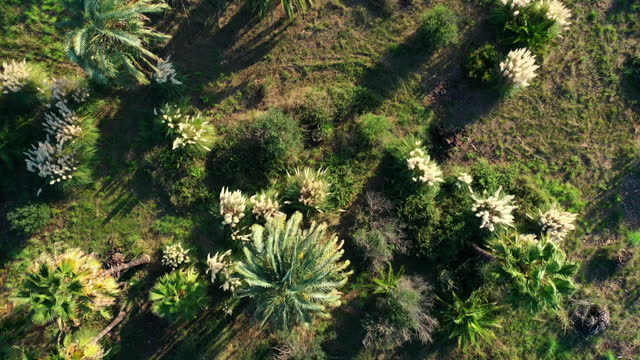 vídeos y material grabado en eventos de stock de aerial, pov, summer foliage outside of dénia, spain - escena no urbana