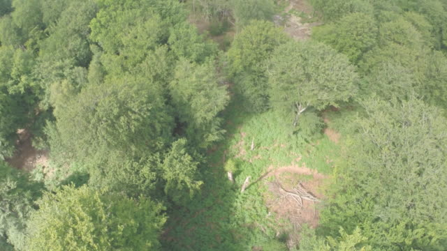 aerial reveal of clearing in forest - idyllic stock videos and b-roll footage