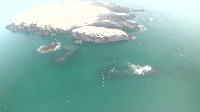 aerial reveal of grassholm island - birds flying in v formation stock videos and b-roll footage