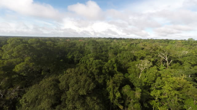 Aerial reverse of Amazon Rainforest + River + still boat
