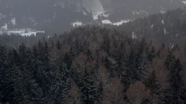 vidéos et rushes de aerial: reversing over mountain and forest in severe snow storm in south tyrol, italy - format hd