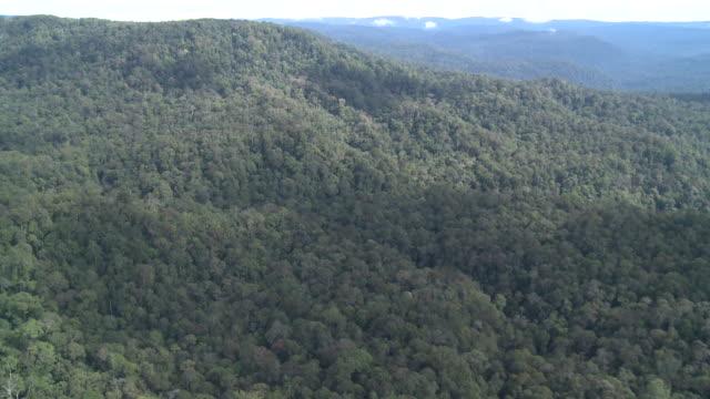 aerial ridge of rainforest, maliau basin, sabah, malaysia, borneo - malaysia stock videos & royalty-free footage