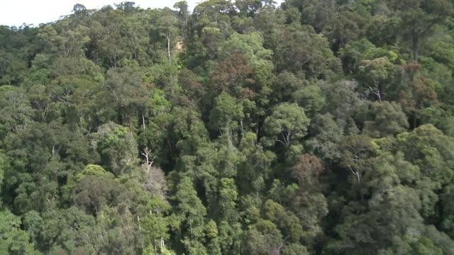 Aerial ridge of rainforest, Maliau Basin, Sabah, Malaysia, Borneo