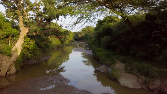 Aerial/ Riverine acacia forest with small stream