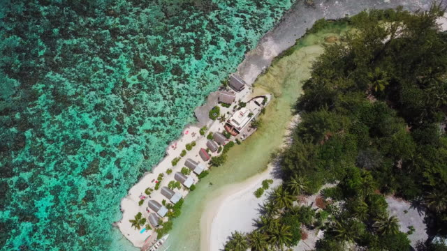 aerial: rooftops of huts and the tops of palm trees on the beach of moorea in the french polynesia - moorea stock videos & royalty-free footage