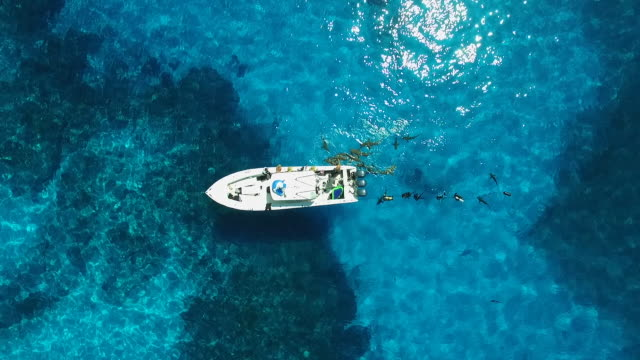 aerial scene of sharks encircling a boat in the bahamas - wide - shark stock videos & royalty-free footage