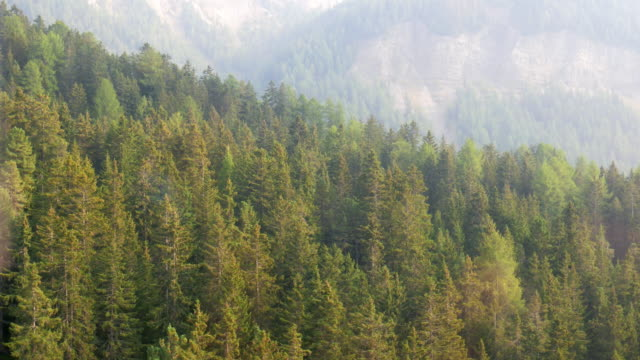 aerial scenic of pine tree forest at dolomites italy - pine tree stock videos & royalty-free footage