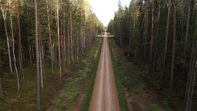 aerial scenic view: drone flies straight along alley in baltic forest - 散歩道点の映像素材/bロール