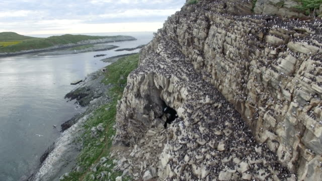 aerial/ seabird colony ,hornoya island - cliff stock videos & royalty-free footage