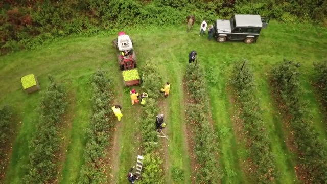 aerial seasonal workers picking apples - apple fruit stock videos & royalty-free footage
