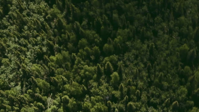 aerial sequence showing the boundless yukon wilderness, canada. - klondike river stock videos and b-roll footage