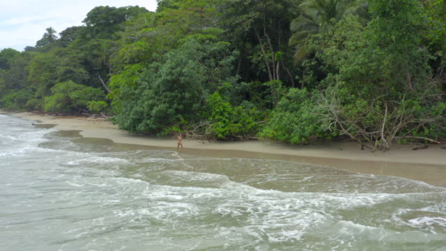 aerial: sexy woman in bikini walking on sand - tropiskt träd bildbanksvideor och videomaterial från bakom kulisserna