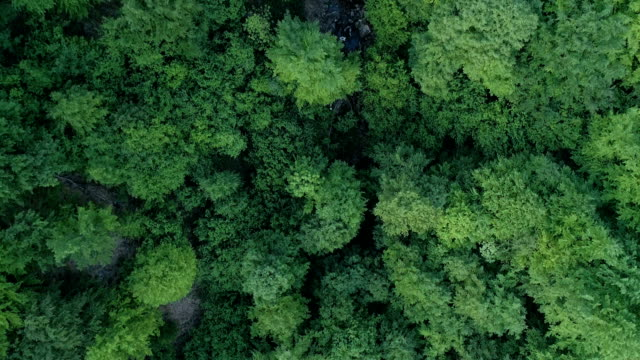 aerial shoot of green forest and waterfall - serbia stock videos & royalty-free footage