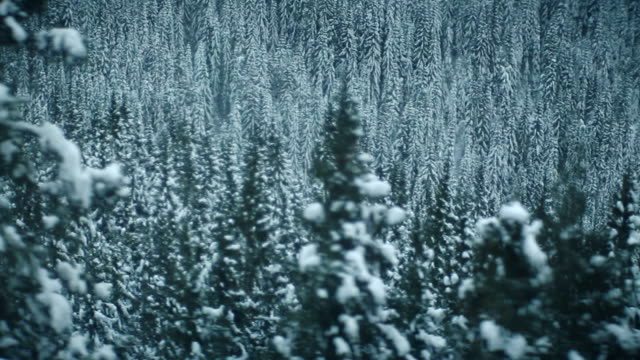 Aerial shoot snowy forest