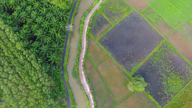 luftaufnahme 4k, grüne reisfelder im süden von thailand - gummi stock-videos und b-roll-filmmaterial