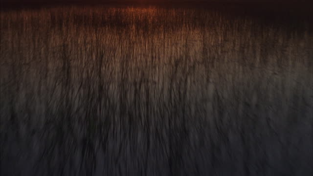aerial shot across a grassy marsh during golden-hour. - boat point of view stock videos & royalty-free footage
