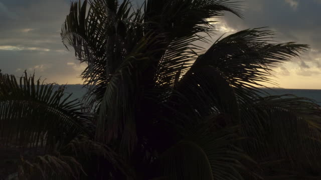 vídeos de stock e filmes b-roll de aerial shot behind palm trees blowing in the wind on the beach in cancun, mexico at sunset - water's edge