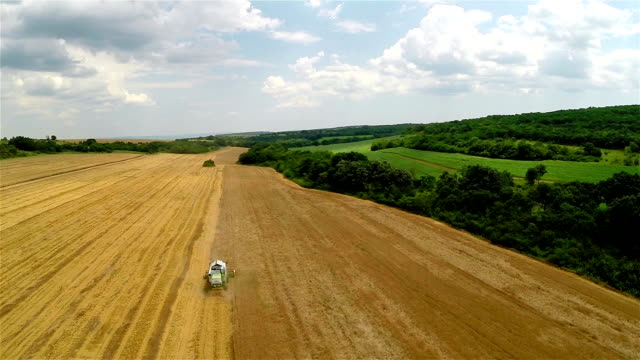 Aerial Shot Combine harvesting a field of wheat