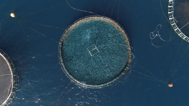 aerial shot directly above a circular shaped fish farm in the ocean, lanzarote, spain - climate change stock videos & royalty-free footage