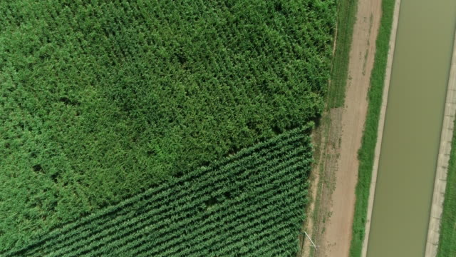 aerial shot drone view of sugarcane greenhouse - sugar cane stock videos and b-roll footage