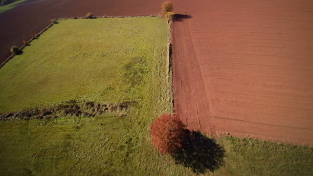 aerial shot fall rees in grass and vast ploughed fields - pflügen stock-videos und b-roll-filmmaterial