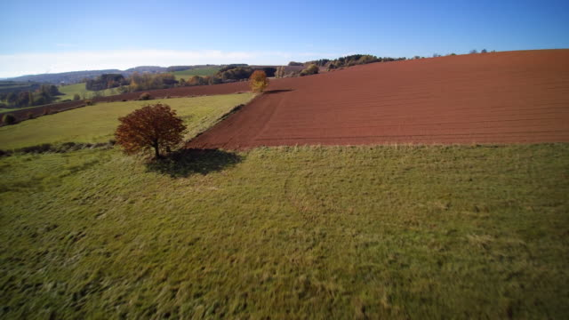 aerial shot fall trees in green and bordering vast ploughed fields in rolling landscape