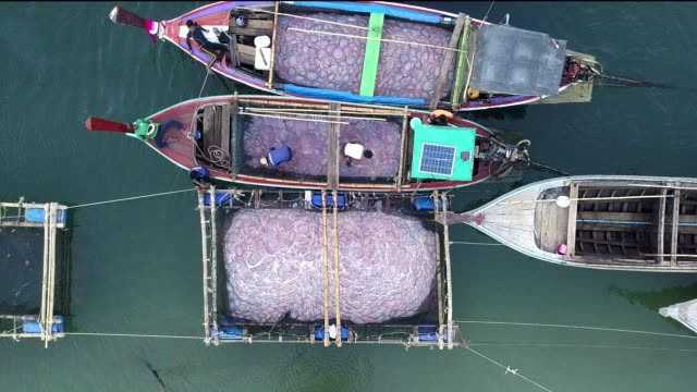 aerial shot. fishing boats with jellyfish fishery, trang, thailand. - protein stock videos & royalty-free footage
