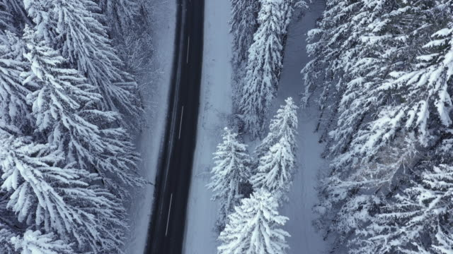 4K aerial shot flying above snow covered forest trees and empty winter road