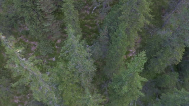 aerial shot flying over a forest - raymond maine stock videos & royalty-free footage