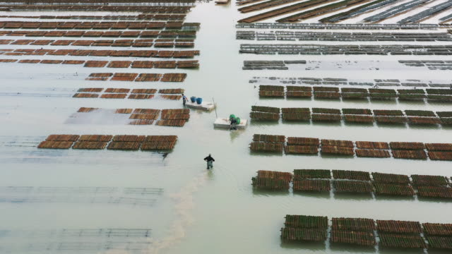 aerial shot flying towards people working on an oyster farm, fouras, france - walking in water stock videos & royalty-free footage