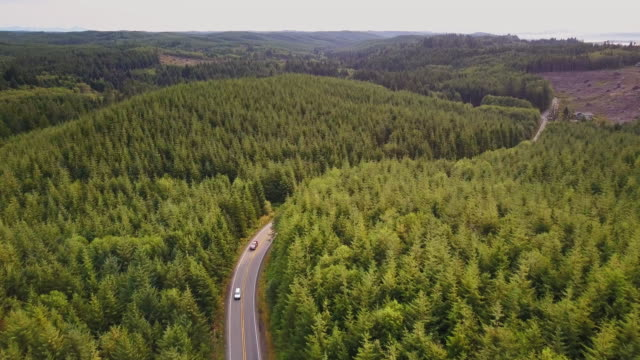 aerial shot following road through managed forest - industria forestale video stock e b–roll