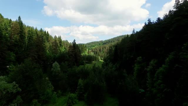 4K Aerial Shot Forest