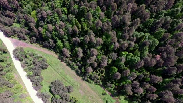 4 K Antenne Aufnahme Forest