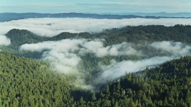 vídeos de stock, filmes e b-roll de o tiro aéreo da névoa acima cobriu a floresta - sequoia sempervirens