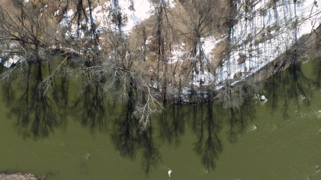 aerial shot looking directly down at trees along a river in winter snow on ground - new paltz stock videos and b-roll footage
