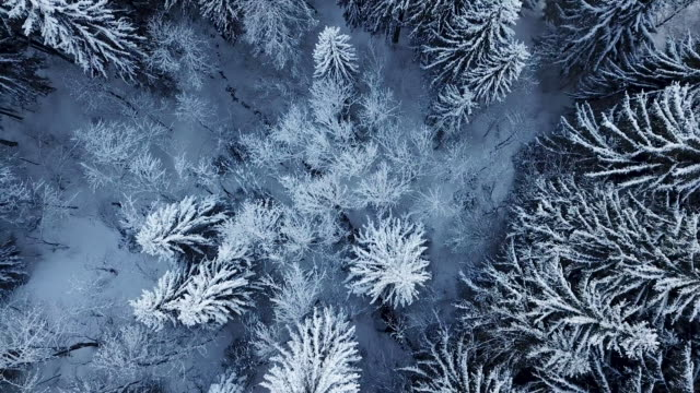 Aerial shot looking directly down on snow covered pine trees
