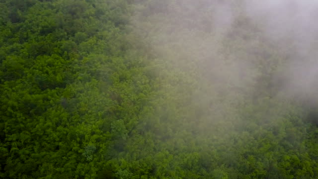 vídeos de stock e filmes b-roll de aerial shot : morning mist at tropical rain forest, thailand. - nevoeiro
