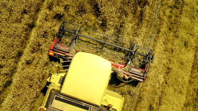 Aerial Shot Of A Combine Cutting Wheat