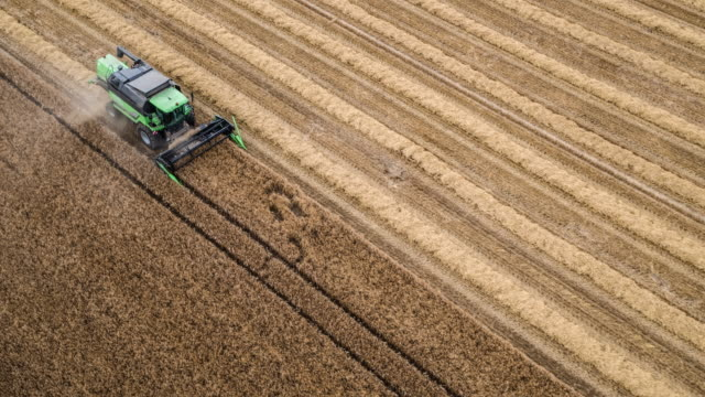 aerial shot of a combine harvester cutting wheat - agricultural machinery stock videos and b-roll footage
