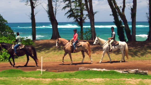 aerial shot of a couple taking a guided horseback ride along ocean - タートル湾点の映像素材/bロール