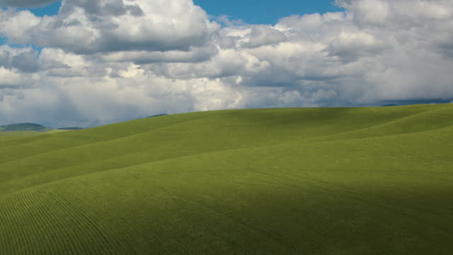 aerial shot of a field during daytime - palouse stock videos & royalty-free footage