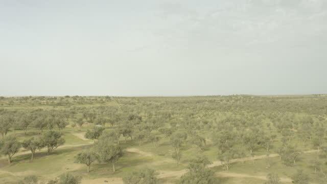 aerial shot of a forest near beer sheba - ネゲブ点の映像素材/bロール