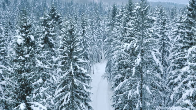 Aerial shot of a forest whitened by snow